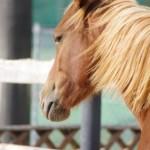 馬糞で土壌改良