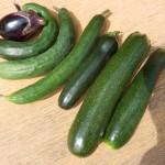 家庭菜園でいろいろ収穫した