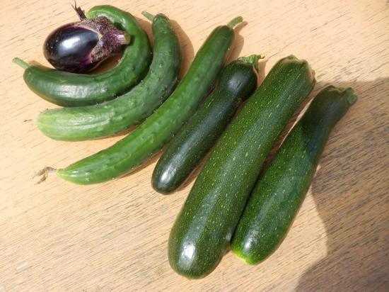 家庭菜園のキュウリ・ナス・ズッキーニ