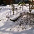 いきなり初雪(2013年11月19日)