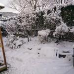 雪が積もった(2014年1月9日)